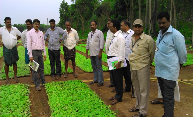 field manager jobs kvks in telangana